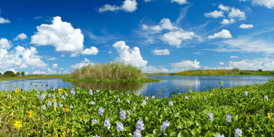 Best Rivers to Visit in Florida